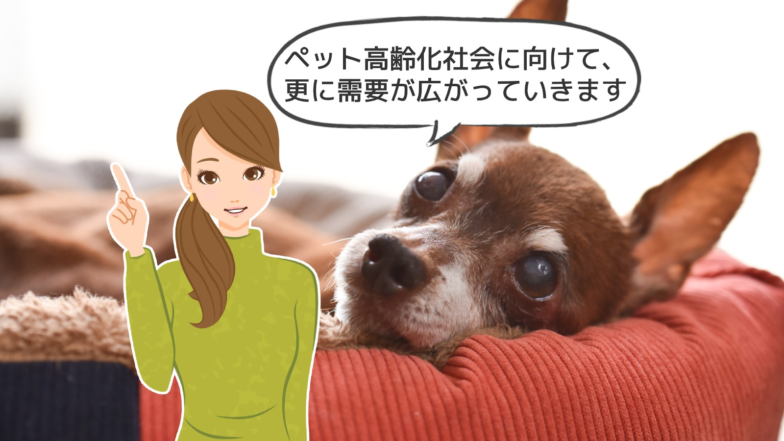 「犬猫介護アドバイザー資格」のアイキャッチ画像
