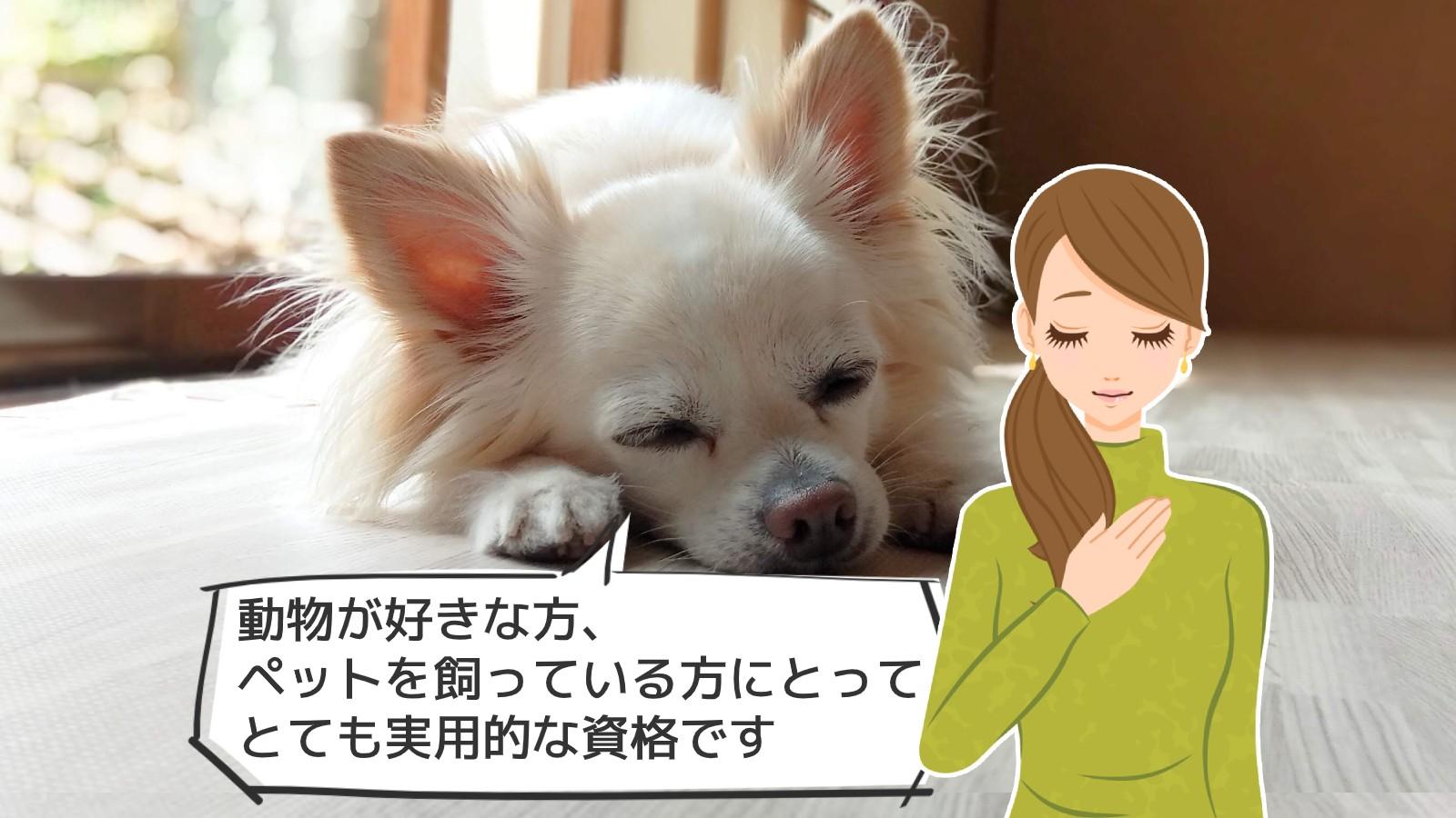「動物介護資格」のアイキャッチ画像