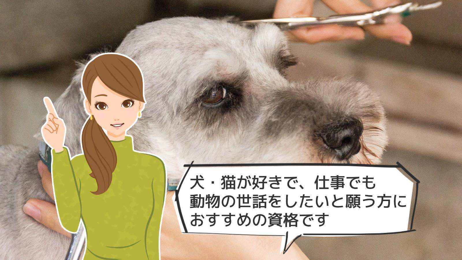「ペットトリミング資格」のアイキャッチ画像